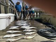 Carolina Girl Sportfishing Charters Outer Banks, In the Meat