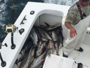 Carolina Girl Sportfishing Charters Outer Banks, Great Tuna Fishing Continues & Tile & Sea Bass Season Opens