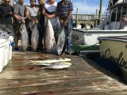 Carolina Girl Sportfishing Charters Outer Banks, Want Tuna we you got it !