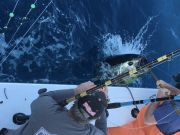 Carolina Girl Sportfishing Charters Outer Banks, Bluefin & Bigeye Tuna Bite As Good As It Gets