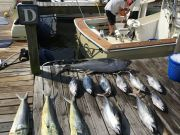 Carolina Girl Sportfishing Charters Outer Banks, Tuna & Mahi